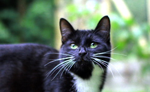 Gayton Vets Pet Advice - cat in garden